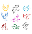 Pigeons and doves vector image vector image