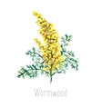 Watercolor wormwood herb vector image vector image