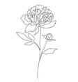 beautiful peony flower line art vector image vector image