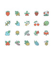 forest berries colored flat line icons - blueberry vector image vector image