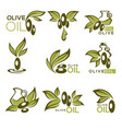 Green olive and oil collection of logo