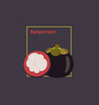 hand drawing mangosteen with slice on dark vector image vector image