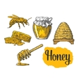 Honey set Jars of honey bee hive clover vector image vector image