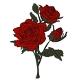 Beautiful red rose isolated on white vector image vector image