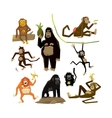Different monkeys in different poses 2016 symbol vector image vector image