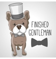Dog in hat vector image vector image