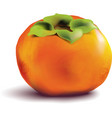 Fruit persimmon on white background vector image