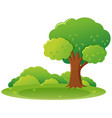 park scene with tree and grass vector image