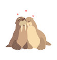 couple of walruses in love embracing each other vector image vector image