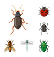 design of insect and fly symbol collection vector image