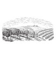 vine plantation hills trees clouds on the vector image vector image