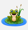 cartoon frog on a leaf in the pond vector image