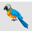 colorful parrot on transparent background vector image vector image