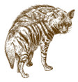 engraving of hyena vector image vector image