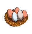 fresh eggs hand draw vector image vector image