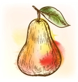Pear watercolor painting vector image vector image