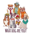Group dog fashion hipster isolated on white vector image