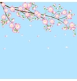 background with cherry blossom branch vector image