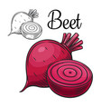 beet drawing icon vector image