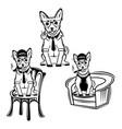 chihuahua dog with cigar logo vector image vector image