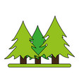 wonderful trees forest vector image vector image