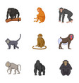 adult individuals of monkeys icons set vector image