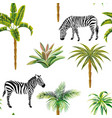 animal zebra palm trees cactus seamless white vector image vector image