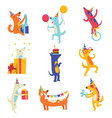collection cute dogs in party hats funny vector image