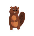 cute brown beaver standing isolated on white vector image vector image