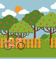 orchard landscape in flat style vector image