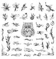 Set of Creative Swirl Vignettes vector image