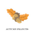 autumn peanuts on white background vector image