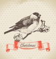 Christmas bullfinch and ashberry vector image