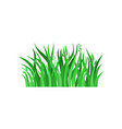 green spring grass with spikelets natural vector image