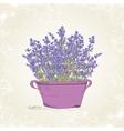 lavender in pot vector image vector image