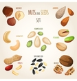Nut mix set vector image vector image