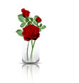 red roses in clear glass vector image vector image