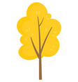 yellow tree in autumn park forest or garden plant vector image vector image