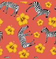 zebra yellow hibiscus red background vector image vector image