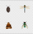 set of insect realistic symbols with bug vector image