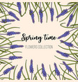 spring flowers muscari frame vector image vector image