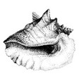 with big seashell vector image