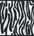 zebra fur texture vector image