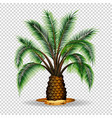 palm tree on transparent background vector image vector image