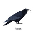 raven isolated on white background intelligent vector image vector image