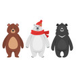 set of three different bears vector image vector image