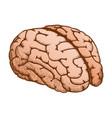 anatomical organ human brain color vector image