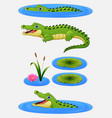 set of cartoon crocodile and water lily vector image
