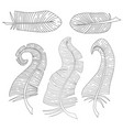set of feathers vector image vector image