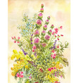 watercolor bouquet of wildflowers hand-drawn vector image vector image